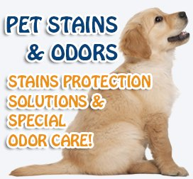 Pet Stains And Odors Removal